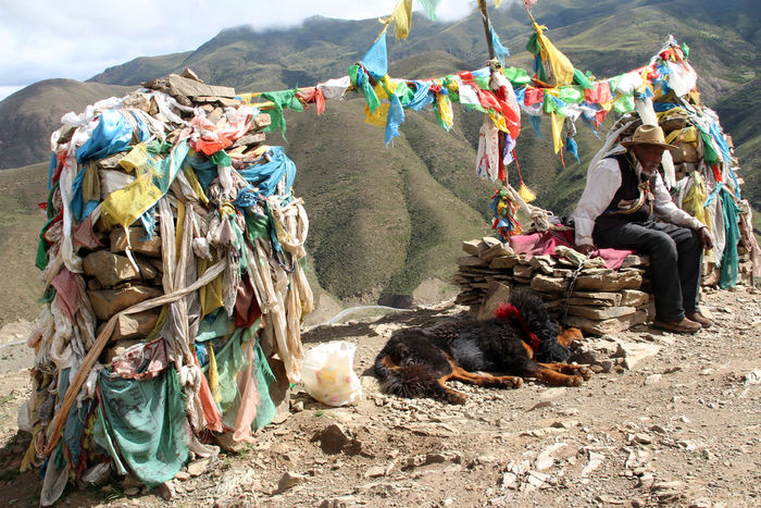 Tibetan mastiff with an old man and prayer flags at Gambara Mountain Pass in Tibet, China Animal Themes Day Dog Domestic Animals Livestock Mammal Mountain Nature No People Old Man Outdoors Sky Sunlight And Shadow Sunny Day Tibet, China Tibetan Mastiff Tibetan Prayer Flags