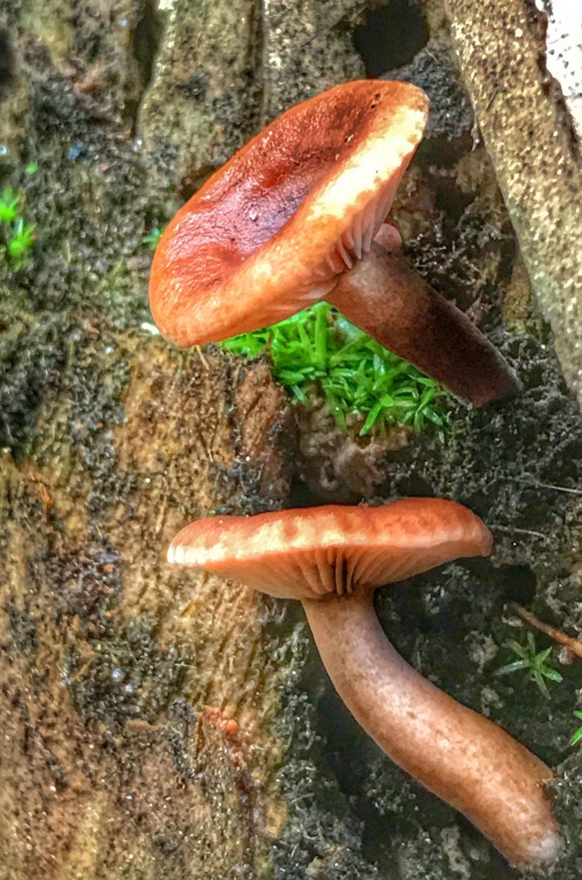 rock - object, no people, day, close-up, nature, animals in the wild, one animal, outdoors, animal themes, slug, beauty in nature, freshness