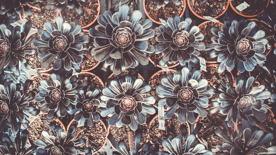 Abundance Art And Craft Backgrounds Brown Ceiling Close-up Craft Creativity Day Decoration Design Floral Pattern Flower Full Frame Indoors  Large Group Of Objects Low Angle View Metal No People Pattern
