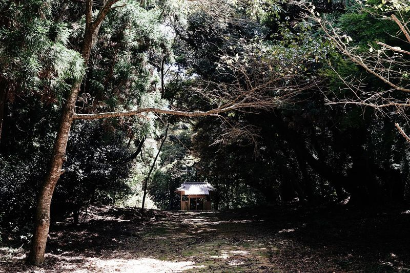 In The Forest Sanctuary  Small Shrine Tree Tree Trunk Growth Nature Outdoors Travel Eternal Place Green Color Eternity Okayama,Japan Okayama Growth The Capture Of The Light Shinto Shrine Welcome To The Other Dimension Shinto Of Japan August 2016