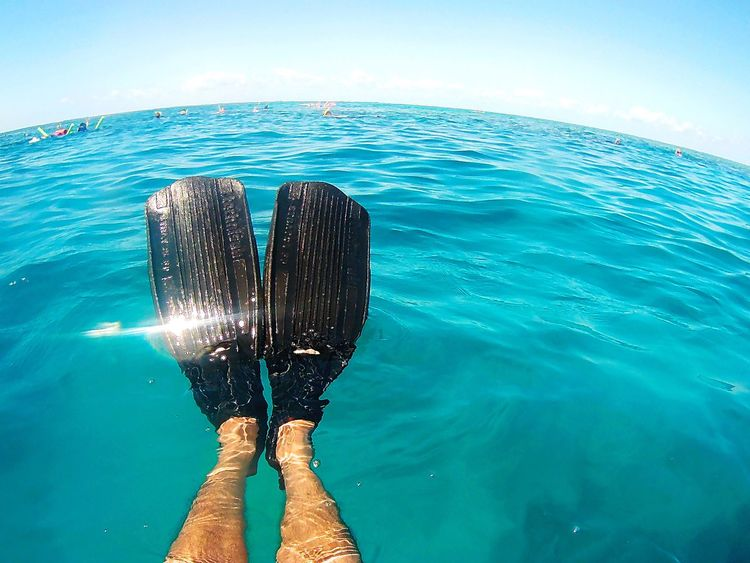 Cairns, North Queensland, Australia Greatbarrierreef Sea One Person Low Section Water Holding Leisure Activity Real People Human Leg Underwater Human Body Part Outdoors Scuba Diving Day UnderSea