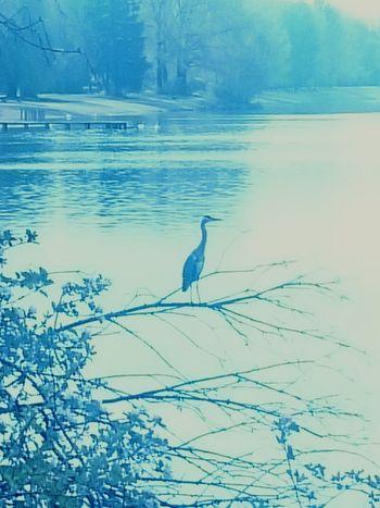 Nature Vogel Wasservogel Reiher