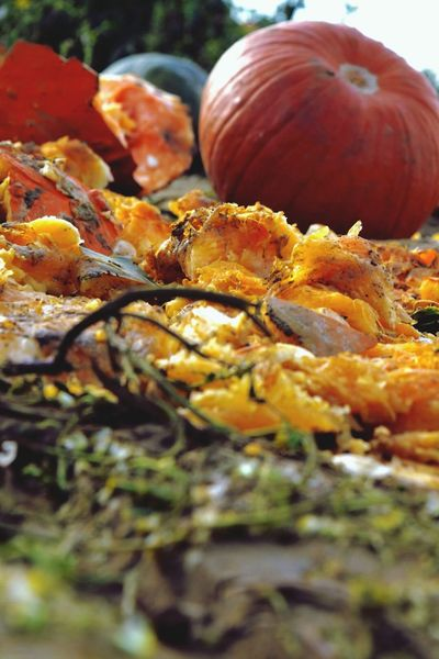 Smashing pumpkins Pumpkin Halloween Orange Decoration Down On The Farm