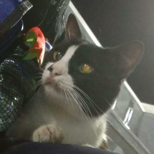 jumpa kucing @ Madinah Al Munawwarah Cute Cat 😻 Animal Themes Domestic Animals Domestic Cat Looking At Camera Madinah Al-munawwarah Mammal One Animal Outdoors Outdoors Photograpghy  Whisker