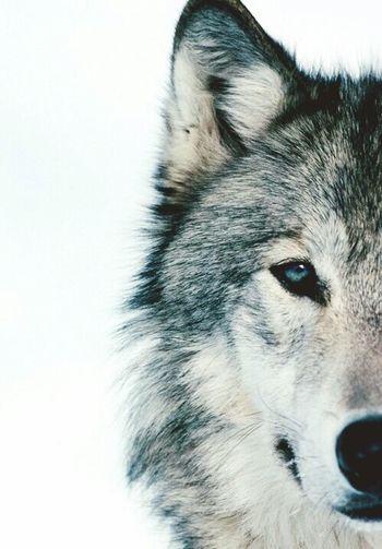 Una mirada dice mas que mil palabras Dogs