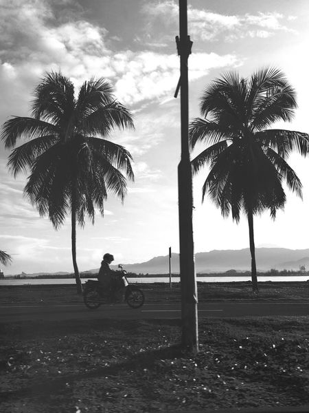Palm Tree Cloud - Sky Beach Sky Tranquil Scene Sea TreesInTheCity Street Photography Streetphotography Black And White
