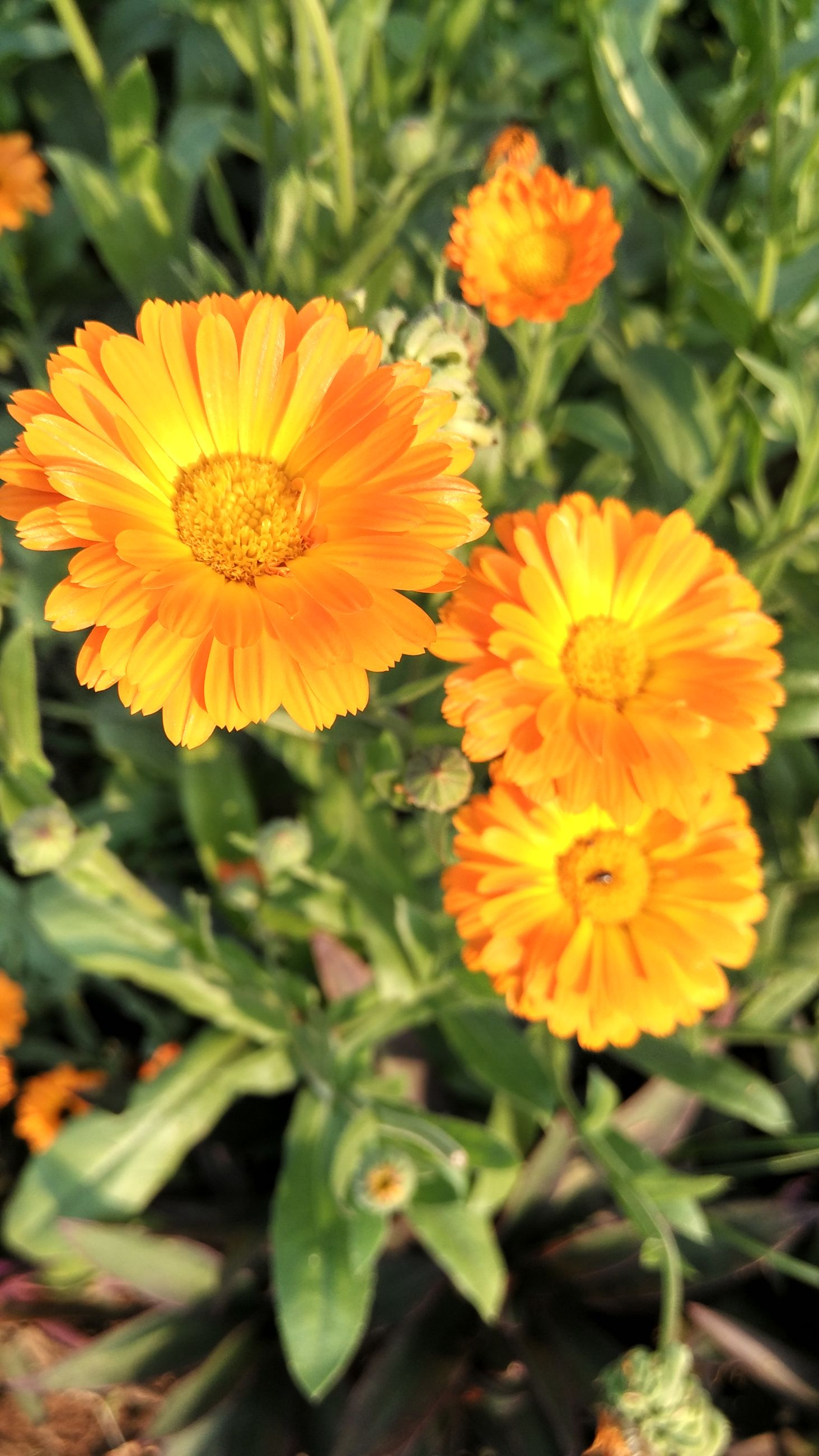 flower, petal, freshness, fragility, flower head, growth, orange color, beauty in nature, blooming, plant, nature, close-up, focus on foreground, yellow, high angle view, in bloom, red, pollen, field, no people