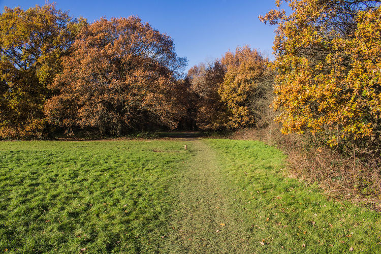 Trees on field during autumn