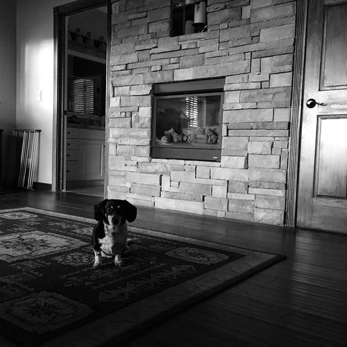 Coop's intense stare-down this morning at 6:20 a.m. - 5 minutes past the normal. #swissclockdog Wasatch Back Wasatch County Utah Architecture Built Structure Mammal Animal Themes One Animal Domestic Pets