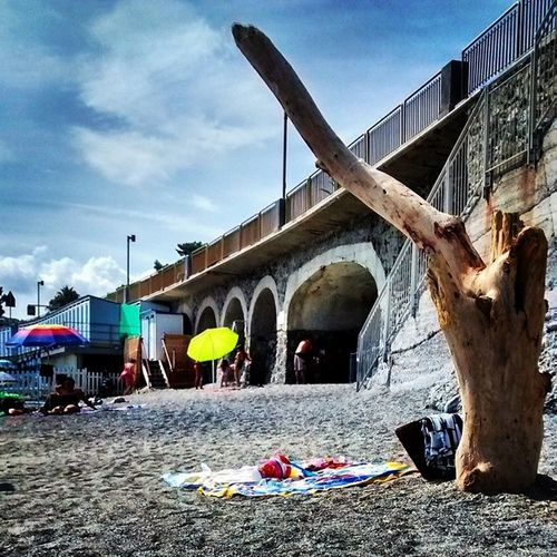 Tronchi e casi umani. Tronchi Casiumani Wood Tronco blunt snub section creation creativity sun summer beach liguria igers_liguria nature tree sea instasummer instabeach instanature cute love celleligure celle photooftheday picoftheday