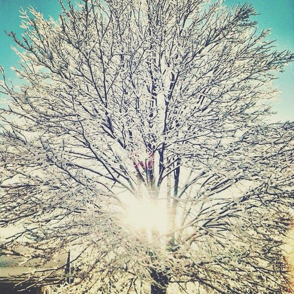 Snow Winter White Color Beauty In Nature Bare Tree Outdoors Majestic Boone NC Snow Day