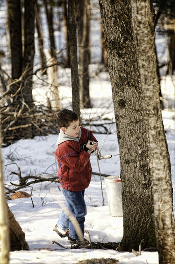 Child Childhood Environment Forest Maple Syrup Maple Syrup Making Maple Tree One Person Outdoors Sap Snow Sugar Bush Sugarbush Syrup Making Tapping Trees Tree Tree Tapping Tree Trunk Working