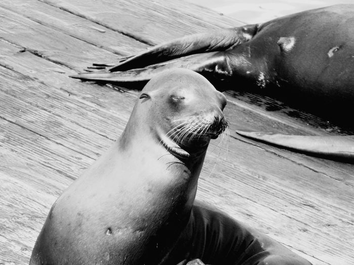 Sea lions on pier during sunny day