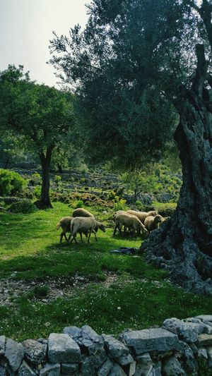 Sidyma Trecking Natural Green Great Atmosphere Oldtree