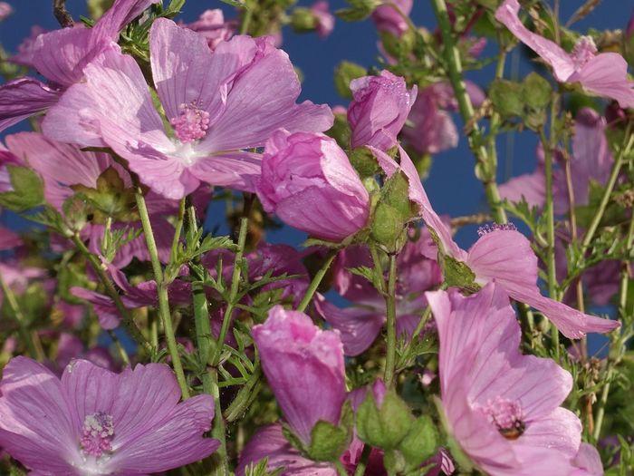 Good Morning Summer Flowers Garden Uckermark MyDayOff