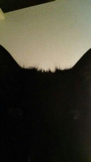 Cat Catoftheday Snapcat via www.getsnapc.at