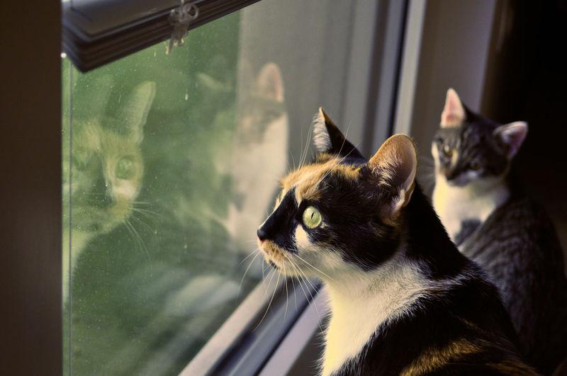 kitten looks at