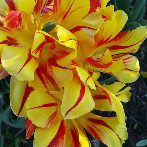 Enjoying Life Nature_collection Flowerporn BrooklynBotanicGarden Tadaa Community WeAreJuxt.com
