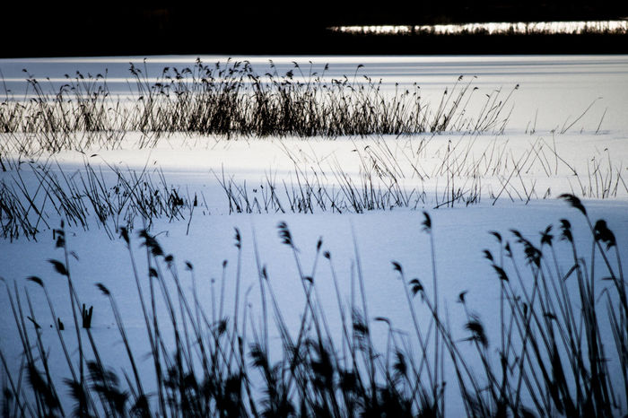 Cold Cold Temperature Denmark Frost Ice Lake Nature Outdoors Quiet Moments Rual Snow Weather White Winter