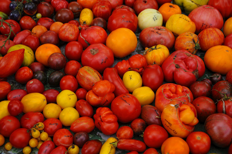 Assortment of different tomatoes Sorts  Abundance Assortment Backgrounds Choice Food For Sale Freshness Fruit Full Frame Healthy Eating Large Group Of Objects Market Market Stall No People Orange Color Outdoors Red Retail  Sale Tomatoes Variation Vegetable Wellbeing Yellow