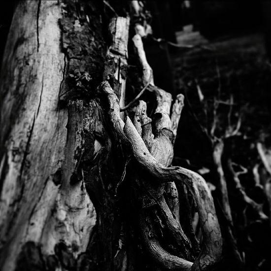 Frail Trees Dead