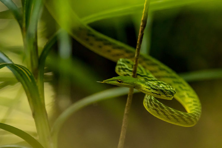 Close-up of snake on plant