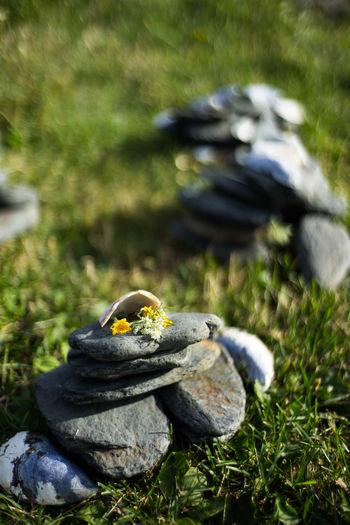 Bokeh Grass Stone