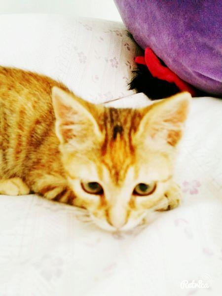 Love ♥ Italy Crazy Cat Cat Kittycat Venere