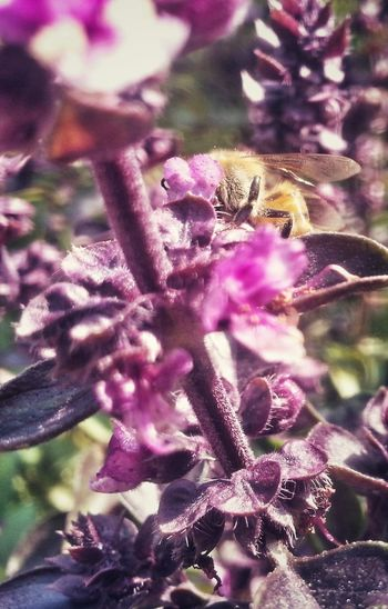 Bee Bumblbee Bzzz Flower Head Flower Springtime Purple Blossom Botany Close-up Plant
