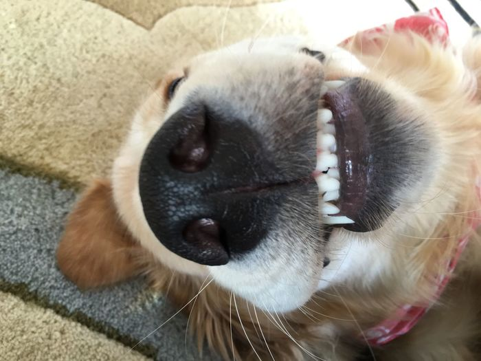 Smile Dogsmiles Dog Puppy Puppysmiles Cute Woof