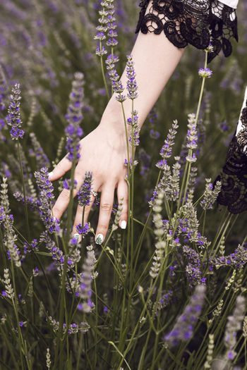 Low section of woman standing on purple flowering plants on field