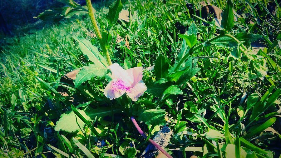 😍😍 Beautiful Nature Nature #loveit Mine 3318