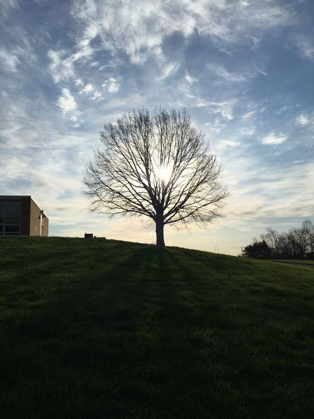 My tree up on the hill 2. Bare Tree Tree Landscape Tranquility Outdoors No People Nature Beauty In Nature Isolated Sky