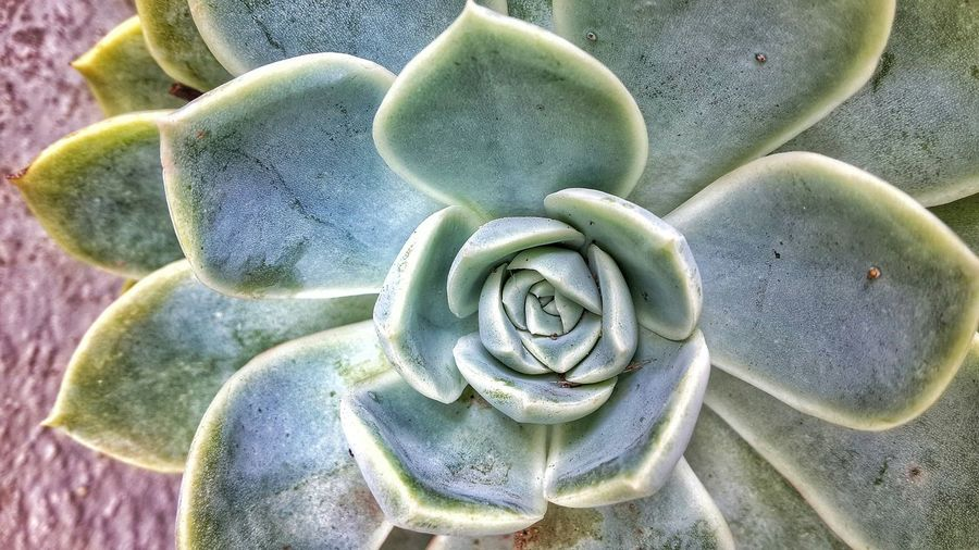 Close-up of cactus plant