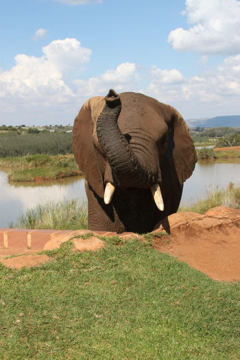 Elephant up and close Big5 Nature South Africa Elephant Elephant Nature Park Elephantlove Elephants Outdoor Photography Outdoors