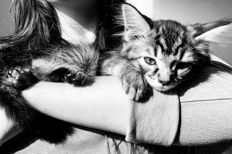 Pets One Animal Mammal Domestic Animal Themes Domestic Animals Animal Cat Domestic Cat Feline Relaxation Indoors  Portrait Close-up No People Animal Body Part Whisker Looking At Camera The Mobile Photographer - 2019 EyeEm Awards