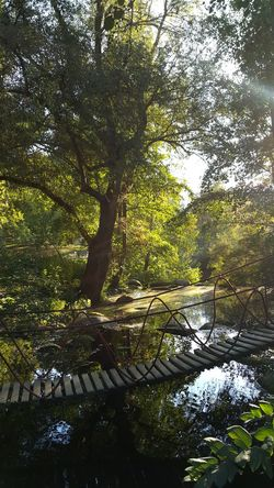 Sunlight And Shadow Light Sunlight Enchanted  Enchanted Forest Fall Evening Evening Light Evening Sun Beauty In Nature Autumn colors Tree Water Branch Forest Full Frame Sky Growing Plant Life Calm Lakeside Standing Water Countryside Streaming