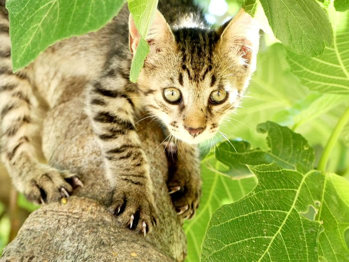 Cat Feline Looking At Camera Animal Themes Climing Nature Green Plant Mammal Portrait Close-up Leopard Little Leopard Animal Wildlife No Edit No Filter Backgrounds Pet Portraits Pets Animal_collection