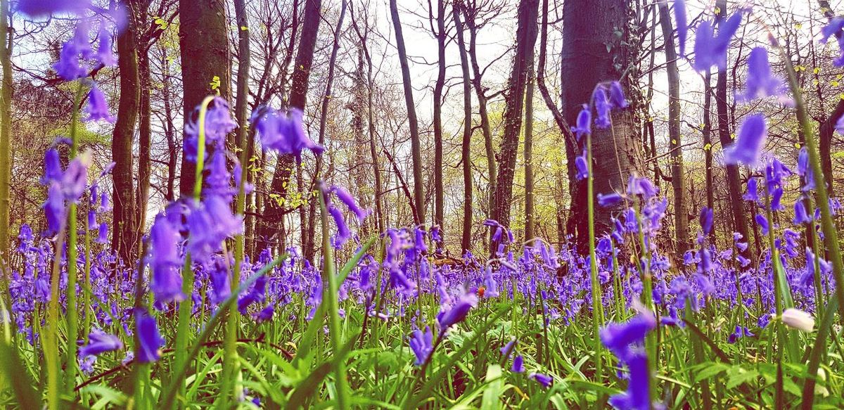 Blue This Is Where I Live... Springtime Spring Flowers Blue Bluebells Bluebell Wood Flower Backgrounds Full Frame Purple Close-up Plant Life Flower Head In Bloom