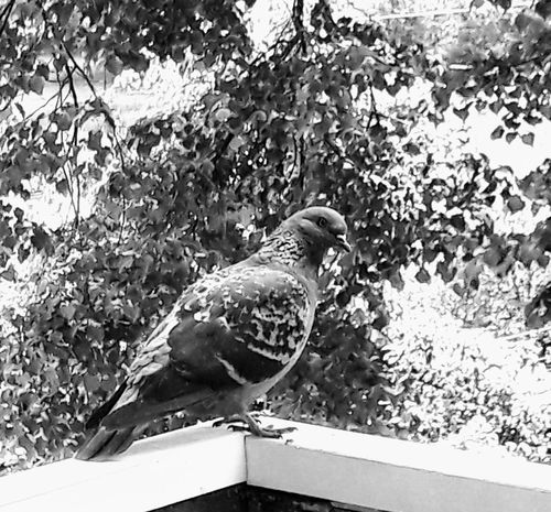 Bird One Animal Nature Animal Themes Day Outdoors Animal Wildlife Animals In The Wild Close-up Beauty In Nature Beauty In Nature Nature Springtime Eyeemmarket Pics Photographers On EyeEm ArtWork PicFeeling PicturePerfect LearningPhotography Photos Freshness Built Structure Building Exterior Picsart Live For The Story BYOPaper! The Street Photographer - 2017 EyeEm Awards The Great Outdoors - 2017 EyeEm Awards The Photojournalist - 2017 EyeEm Awards The Portraitist - 2017 EyeEm Awards EyeEmNewHere The Architect - 2017 EyeEm Awards Pet Portraits Pet Portraits Pet Portraits Mix Yourself A Good Time The Week On EyeEm The Street Photographer - 2018 EyeEm Awards