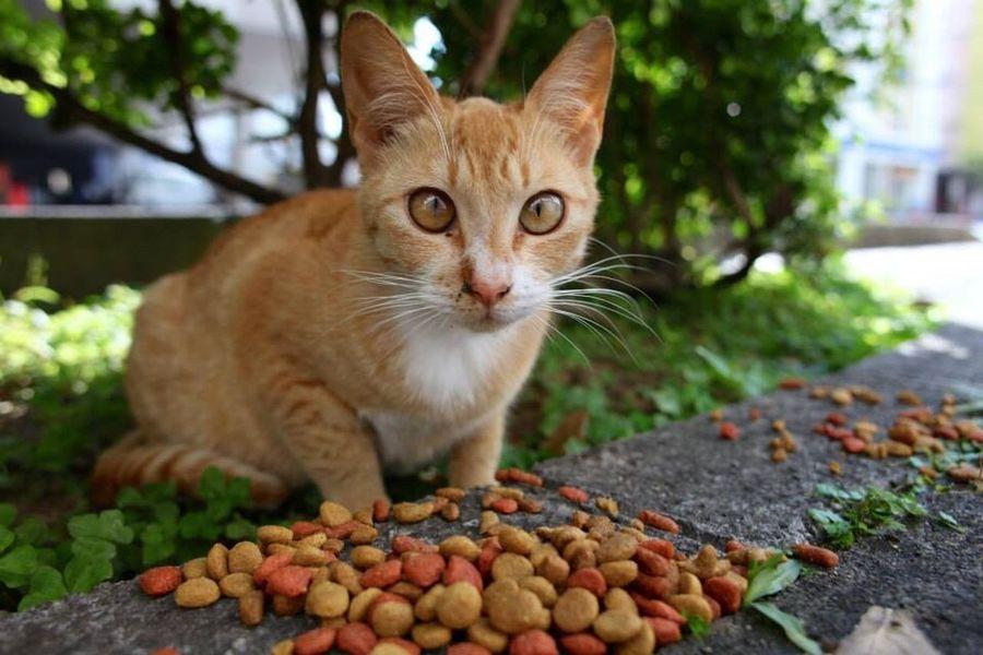 猫 Cat ねこ 可愛い Cute スナップ 日本 沖縄 Okinawa Japan オキナワ Snap The Round Eyes 目がクリクリ