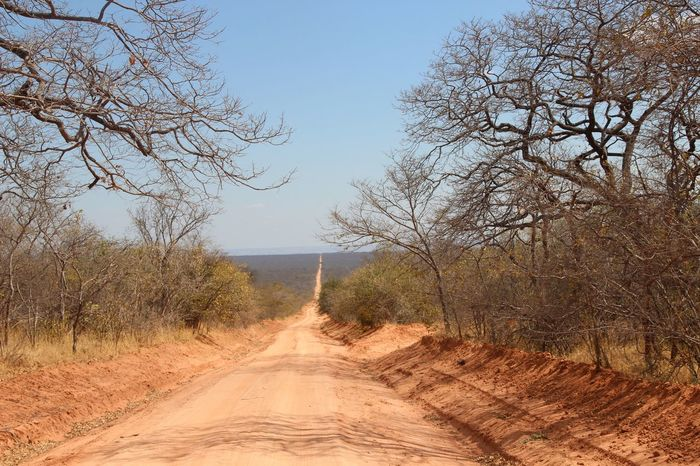 Africa Branch Clear Sky Countryside Landscape Long Nature Outdoors Road Roadtrip Tansania Tanzania The Way Forward Tree