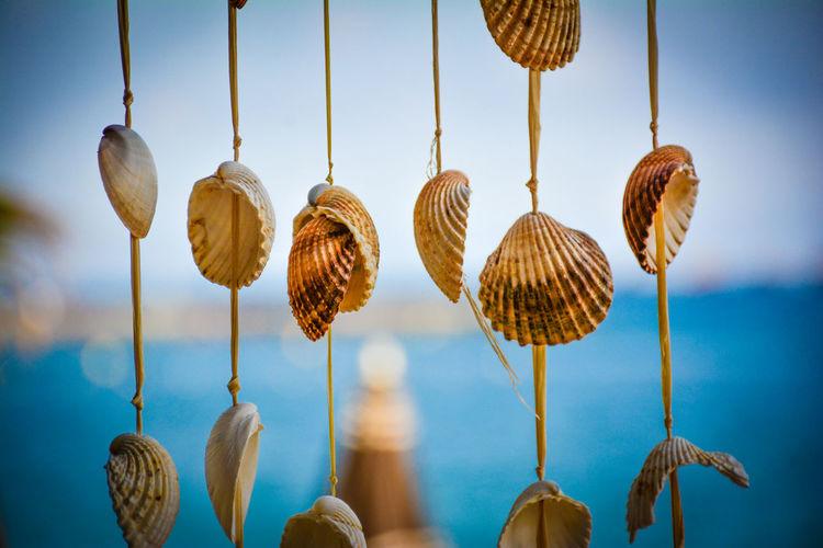Beachdecoration Beachlife Sea Shells SouthFrance Sumertime Sun Wood - Material