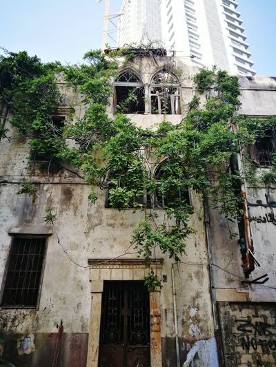 Architecture Built Structure Building Exterior Tree Window Creeper Green Color Architectural Feature Façade Middle East Lebanon TakeoverContrast