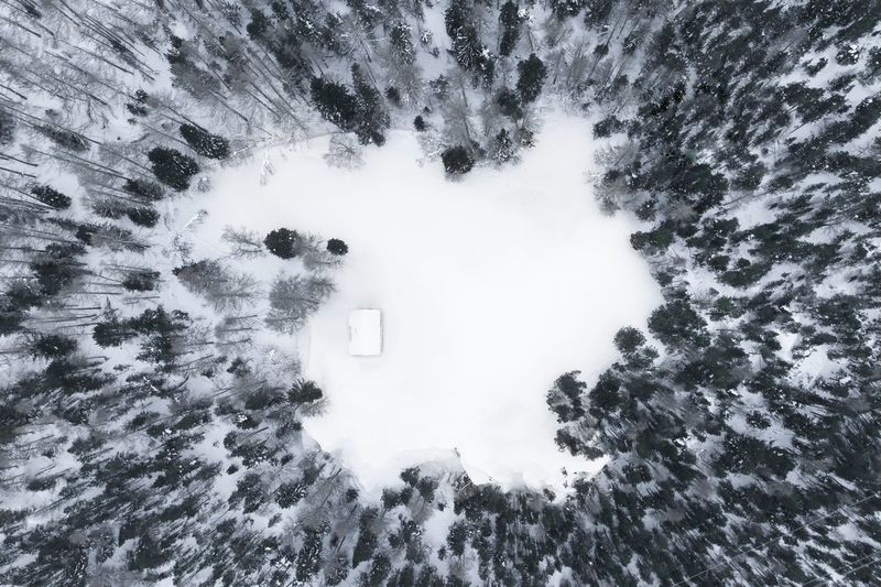 Aerial View Of Trees On Snowy Field