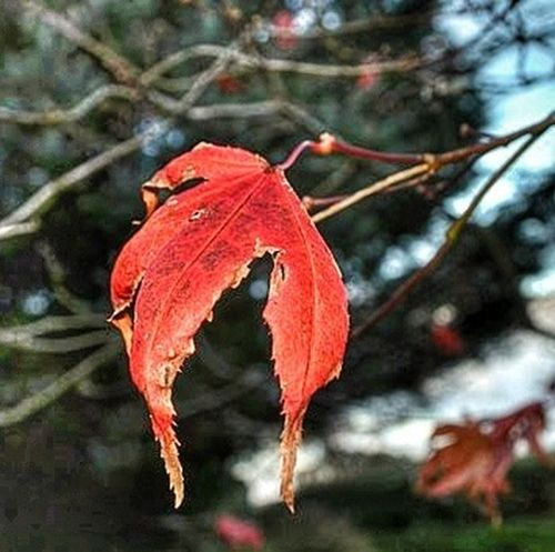 Colors Of Autumn Nature_collection Flippa K Asks: What Inspires You? EyeEm Nature Lover