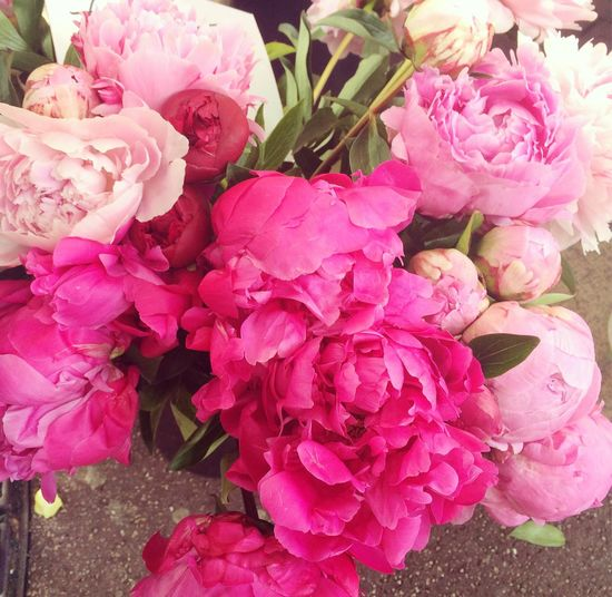 Flowers 🌺🌸🌹 Flower Pink Color Beauty In Nature Nature Freshness Close-up Flower Head Bouquet Peony