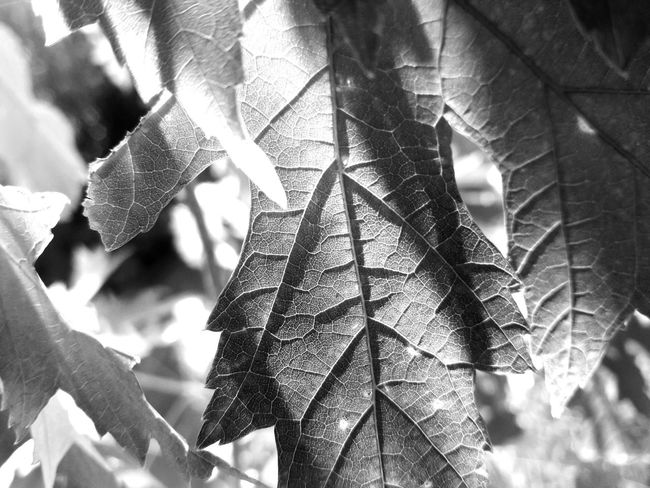 Close-up Day Plant Nature No People Leaf Growth Outdoors Beauty In Nature Tree Nature Tree Forest Growth Beauty In Nature Green Color Silhouette Scenics Sun Sunlight EyeEm Selects Water Fragility The Week On EyeEm Tree Area