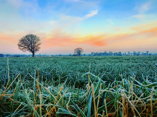 Freeze sunrise Field Nature Sky Growth Beauty In Nature Agriculture Rural Scene Tranquil Scene Scenics Tranquility Landscape Sunset No People Outdoors Cloud - Sky Tree Day Frozen Frost Ice