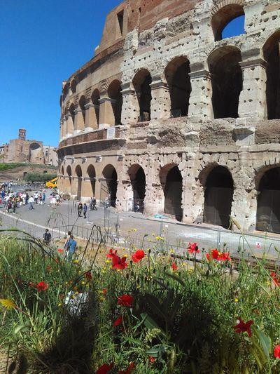 Colosseo and maquis Colosseo Rome Rome Italy Maki Maquis Poppy маки Колизей Рим Италия Vecchitempi  Древность архитектура Roma вечныйгород